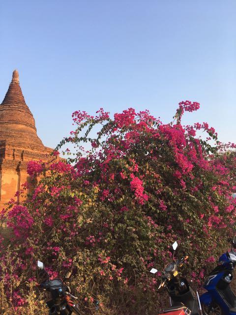Blog Bagan - 45 of 64