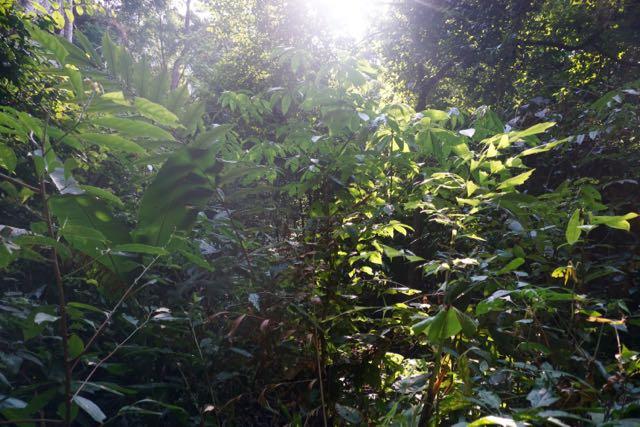 Blog Hsipaw-Pyin Oo Lio - 14 of 74