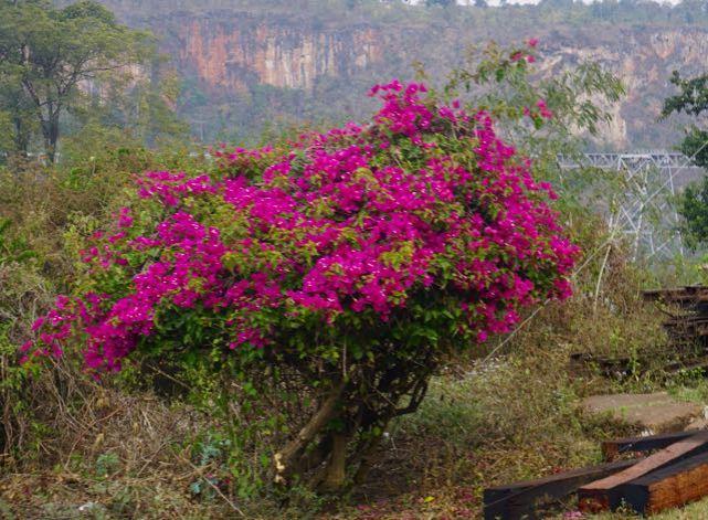 Blog Hsipaw-Pyin Oo Lio - 47 of 74