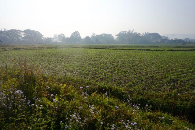 Blog Hsipaw-Pyin Oo Lio - 8 of 74