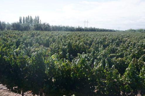 BLOG Mendoza, Cordoba, ROsario - 21 of 116