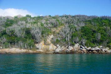 Buzious-Arraial do Cabo - 34 of 73