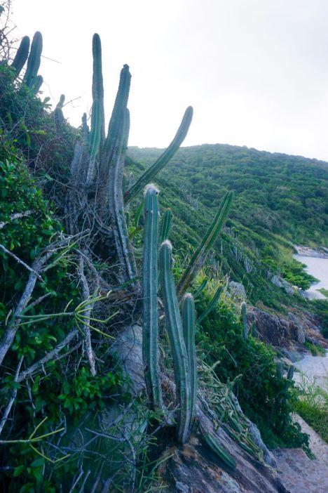 Buzious-Arraial do Cabo - 45 of 73