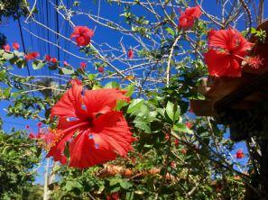 Buzious-Arraial do Cabo - 9 of 73